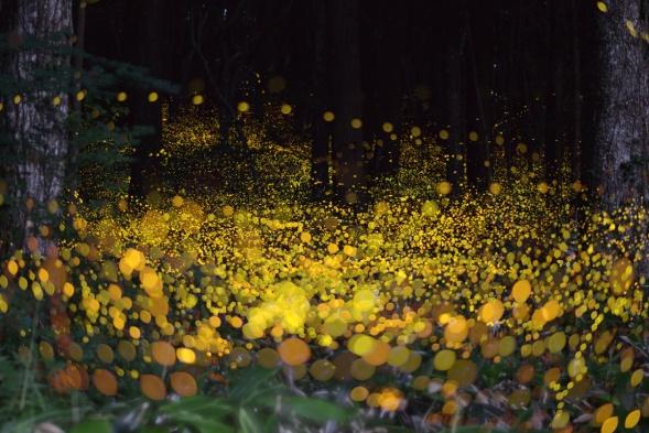 fireflies-by-tsuneaki-hiramatsu-2