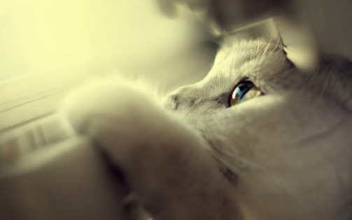 7011864-cute-white-cat