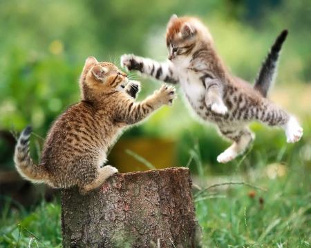 76996_2-cute-cats-fighting_1280x1024