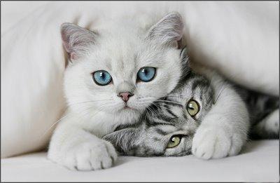 cute-cats-cats-8477436-400-261