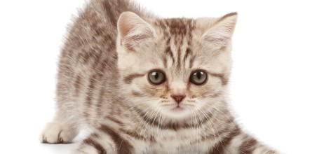 cute-japanese-cat-names-myqj