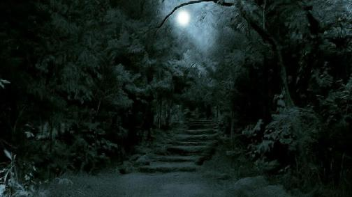 dark-forest-moon-wallpaper-3