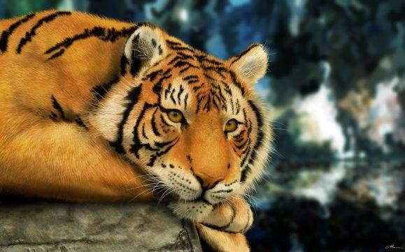bengali-tiger-wallpaper