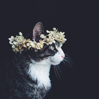 cat-flower